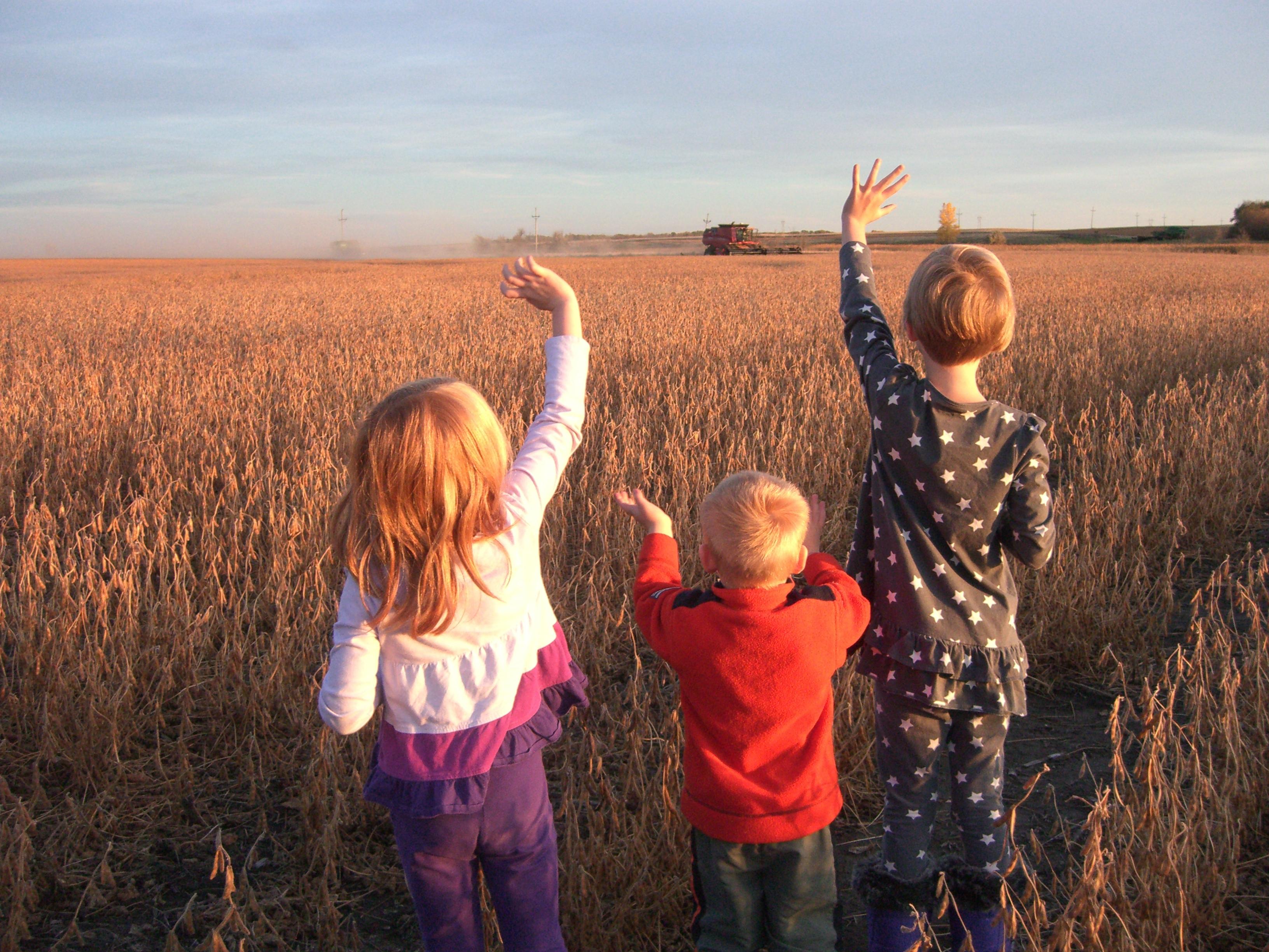 Harvest blog Sarah Wilson