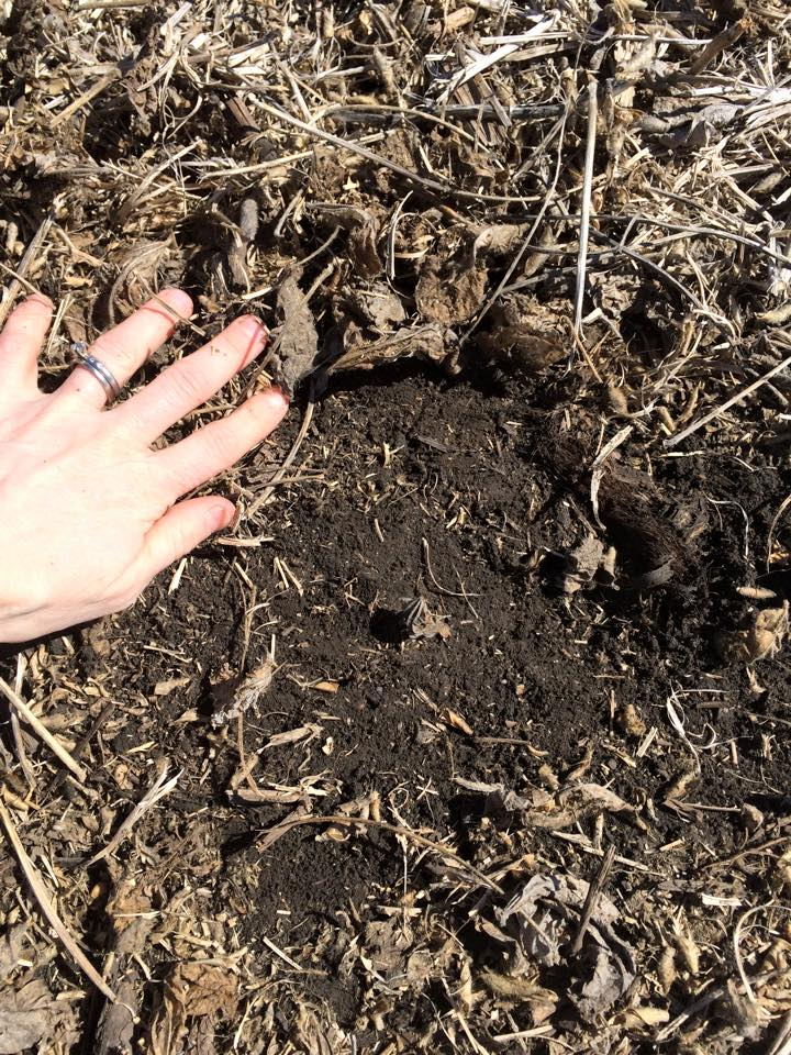crop-chaffe-residue-left-on-soil