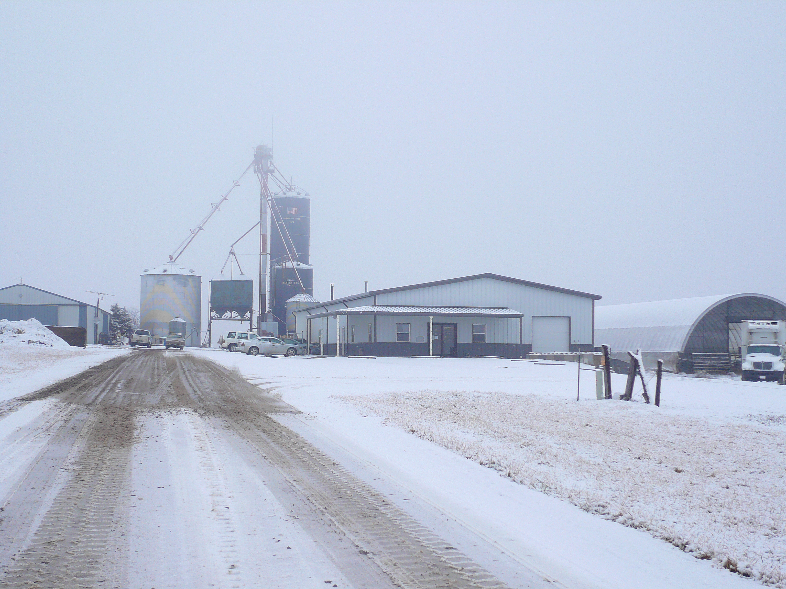 winter cow care
